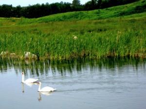 Aktiver Naturschutz: Das prämierte Ostsee Golf Resort Wittenbeck ist ein leuchtendes Vorbild dafür, wie sich der Spielbetrieb auf einer Golfanlage in Einklang mit Flora und Fauna bringen lässt.